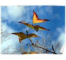 Butterflies? Poster