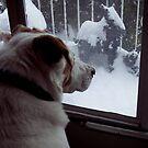 Snow Day by Daniela Weil