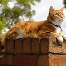 "Angus: ""I'm king of the castle..."" by Andrew Trevor-Jones"