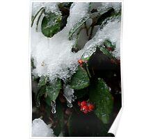 Firethorn Deep Freeze Poster