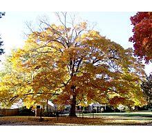 Yellow glowing tree Photographic Print