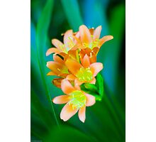 Soft Orange  Photographic Print