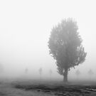 A foggy day by Antonello Mariani