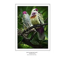 MANY-COLORED FRUIT DOVE (not a photograph or photo manip) Photographic Print