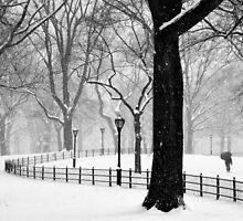 Central Park Walker by Randy  LeMoine