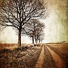 tree lined winter track by meirionmatthias