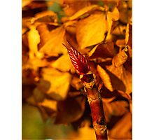 New Bud Photographic Print