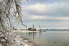 An Icy Outlook by Carolyn  Fletcher