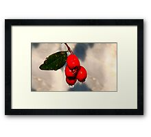 Rain soaked Berries Framed Print