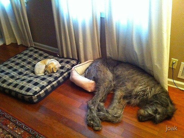 why av got deerhounds! by joak