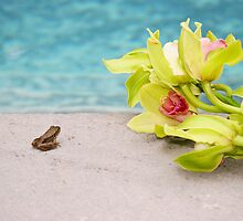 A Little Frog's Day In Paradise by daphsam