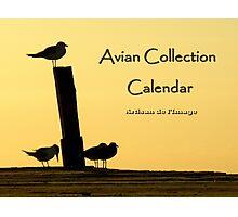 Avian Collection Calendar Cover Photographic Print