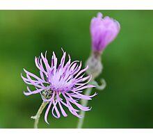 Mystery Wildflower Photographic Print