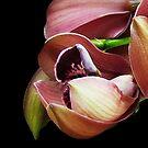 Orchid Baby by Mistyarts