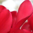 Love Petals  by co0kiem0nster