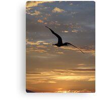 Flying Frigate Bird - Fregata Volando Canvas Print