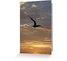 Flying Frigate Bird - Fregata Volando Greeting Card