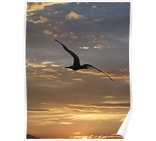 Flying Frigate Bird - Fregata Volando Poster
