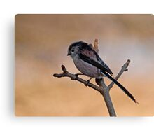 Long-tailed tit Canvas Print