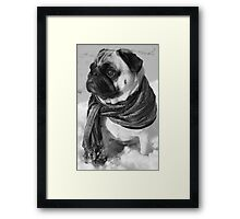 Snow Pug Framed Print