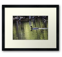 Duck Water Scene Framed Print