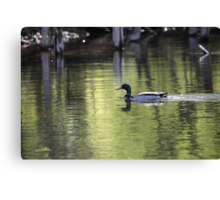 Duck Water Scene Canvas Print
