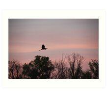 Great Blue Heron on Pink Sky Art Print