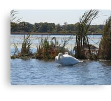 Trumpeter Swans Canvas Print