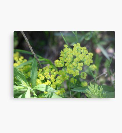 Flowers of Green Metal Print