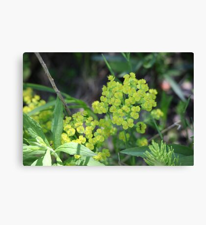 Flowers of Green Canvas Print