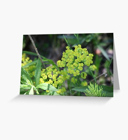 Flowers of Green Greeting Card