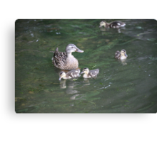Duck with Ducklings Canvas Print