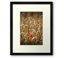 poppy in cornfield Framed Print