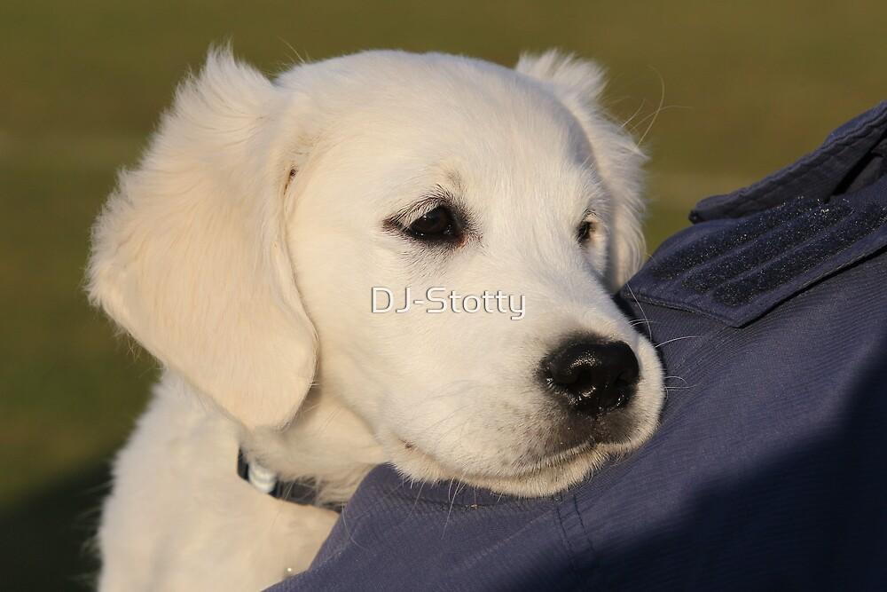Bluey - the  by DJ-Stotty
