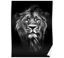 Iblis the male asiatic lion Poster