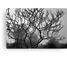 The icy grip of Jack frost Canvas Print