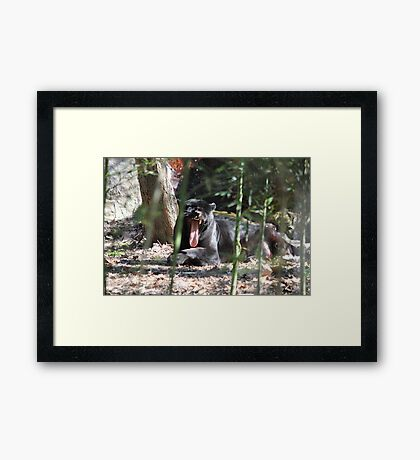 Jaguar Black  Framed Print