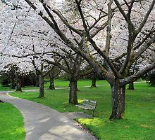 Cherry Blossoms, Vancouver by Pierre Leclerc