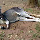 RELAXING GREY KANGAROO by springs