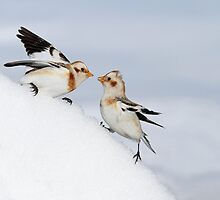 Showdown on the Snowbank by Bill McMullen
