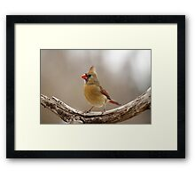Female Cardinal Framed Print