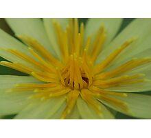 Waterlily sp. Photographic Print