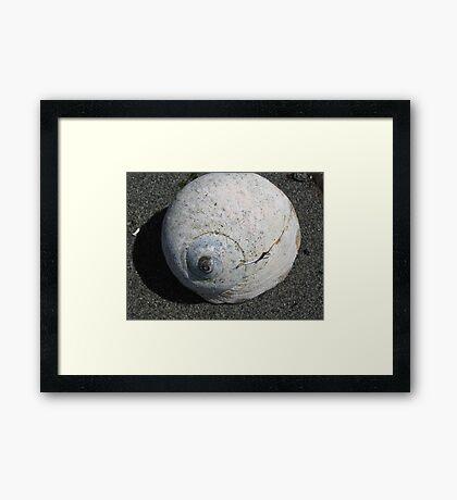 Moon Snail Shell Framed Print