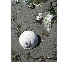 Snails Rock Photographic Print