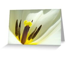 White Tulip Flower art print giclee Tulips Floral Greeting Card