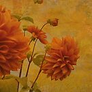 Dalias in Orange by Jeff Burgess
