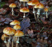 Oak leaf to fungi by olbetsy