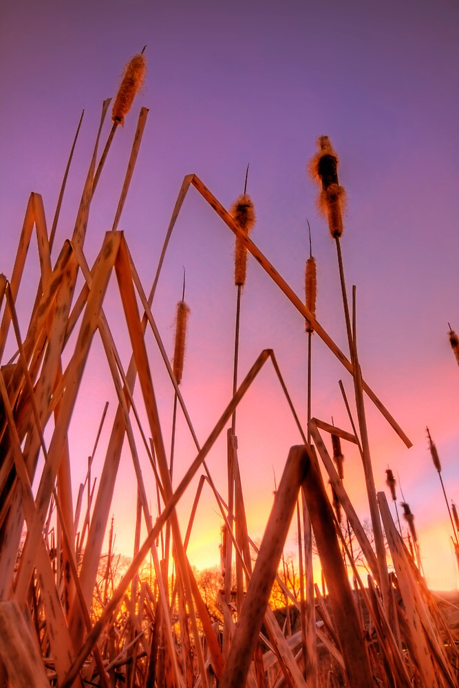 Stalking Sunset by Bob Larson