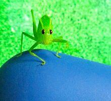 Green& Blue Scene! by D. D.AMO
