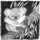 Koala at Night Pencil Sketch by Jane McDougall